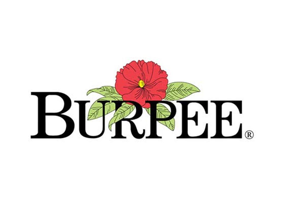 Burpee Discount